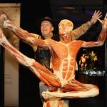 Body+Worlds+Exhibition+Gunther+Von+Hagens+EHDPueoAav1l-1