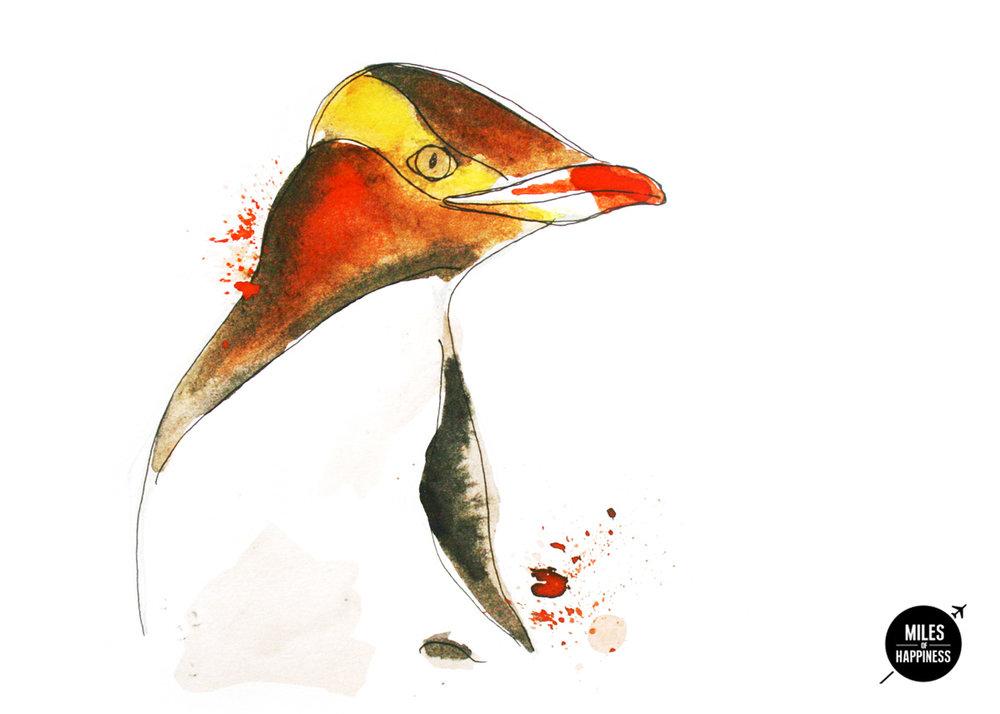 NZ_illustration_Wildlife.jpg