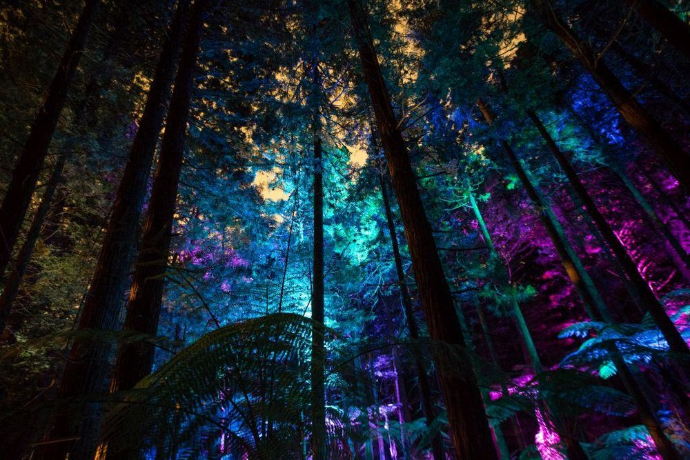Redwood Nightlights: une expérience immersive et unique ! © Redwood Treewalk