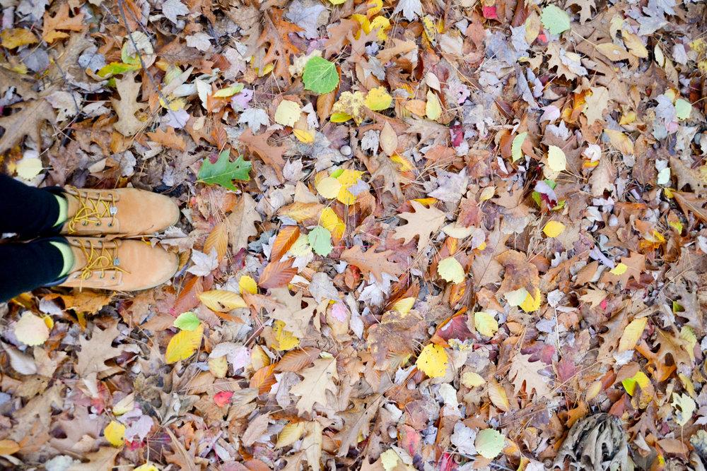 pine_creek-4.jpg