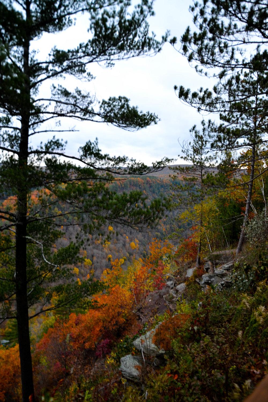 pine_creek-2.jpg