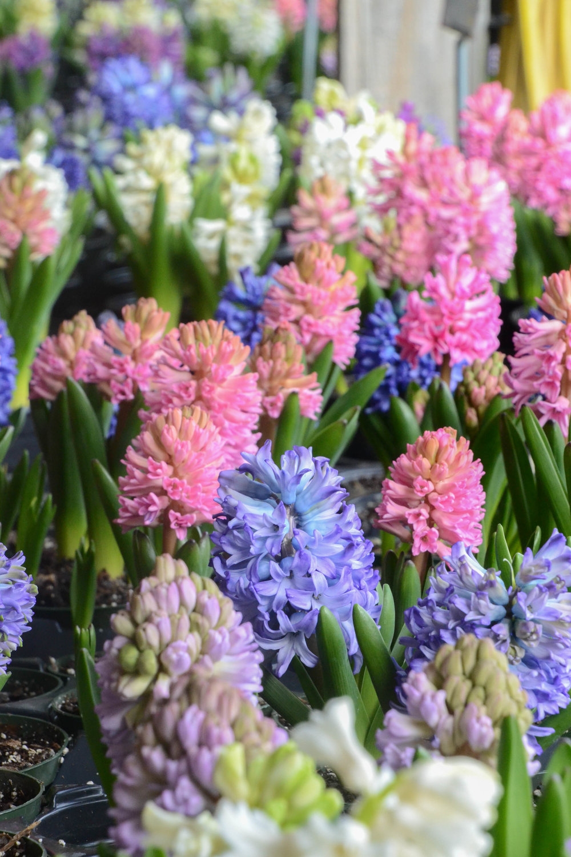 springweekend-7.jpg