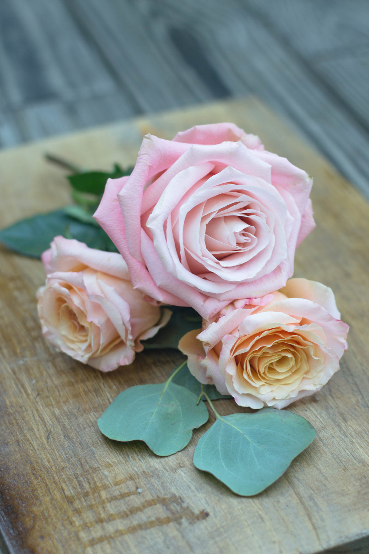 roses_-6.jpg