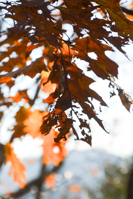 November-11.jpg