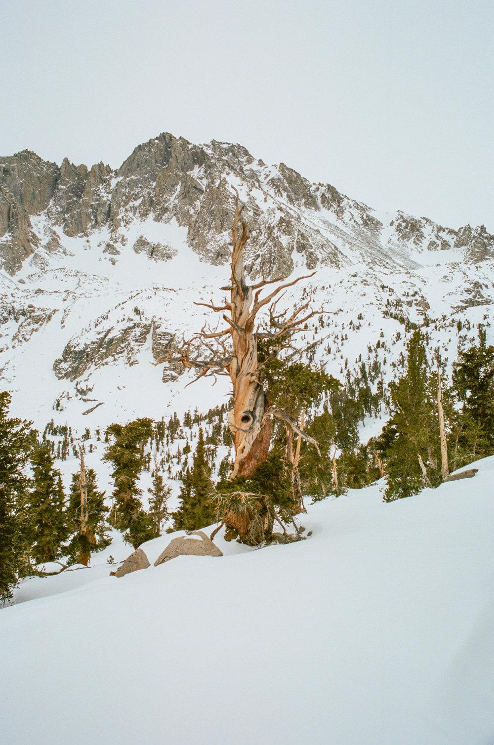 Sierra_MidWinter_Ski-29.jpg