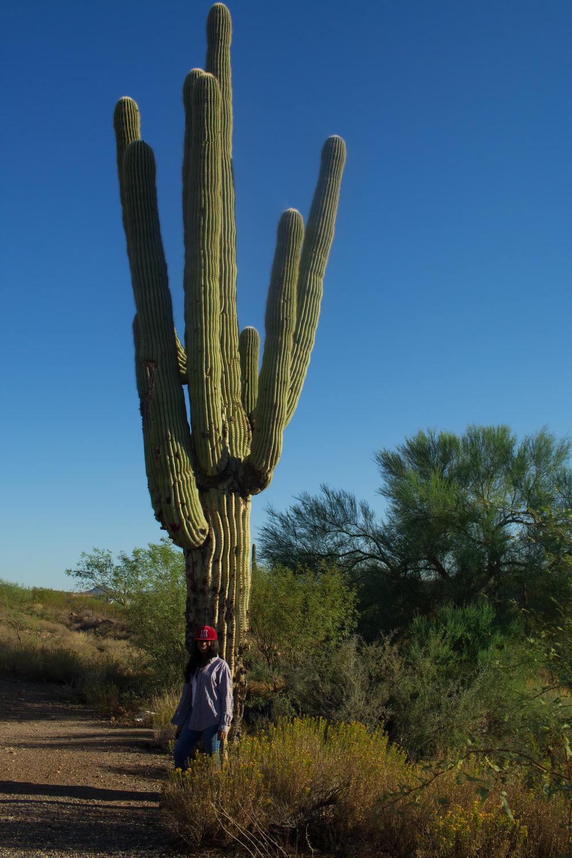 sonoran-desert-arizona-cactus