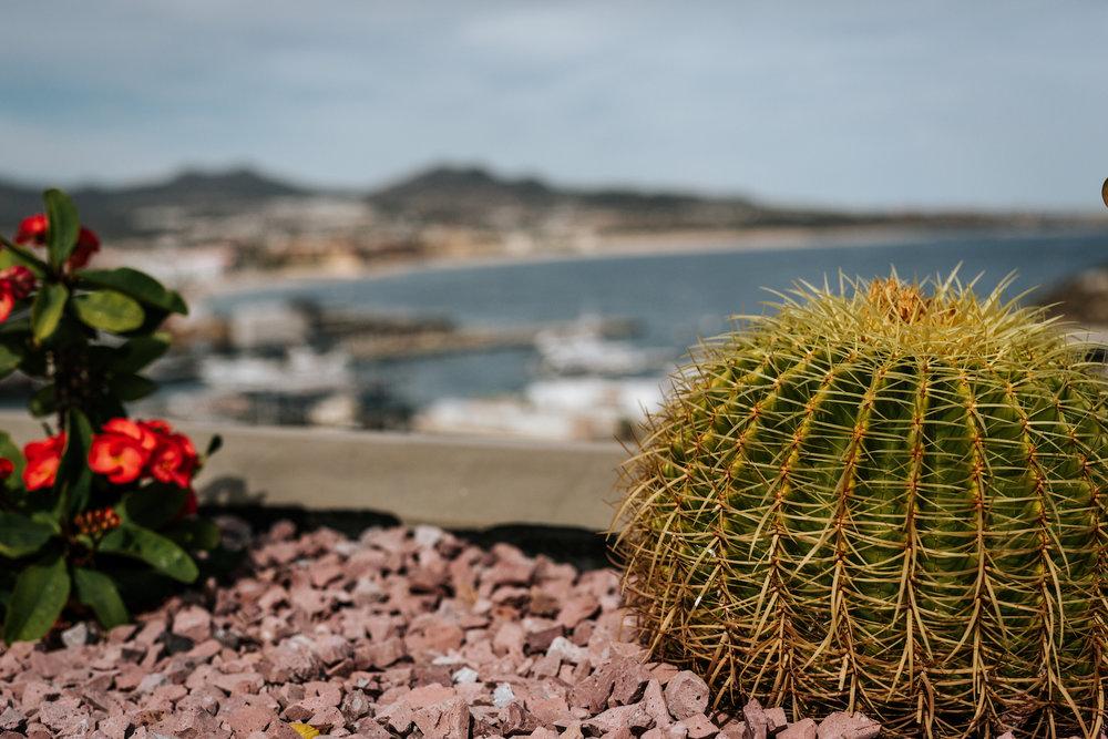 Cabo-San-Lucas-Mexico-Wedding-Photographer-SC-WNC-NC-067.JPG