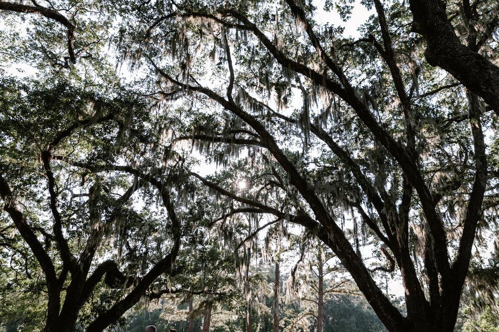 North-South-Carolina-Wedding-Engagement-Photographer-Spartanburg-Greenville-Columbia-Charleston-244.JPG
