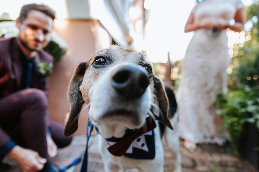 Spartanburg-Greenville-Columbia-Wedding-Engagement-Photographer-231.JPG