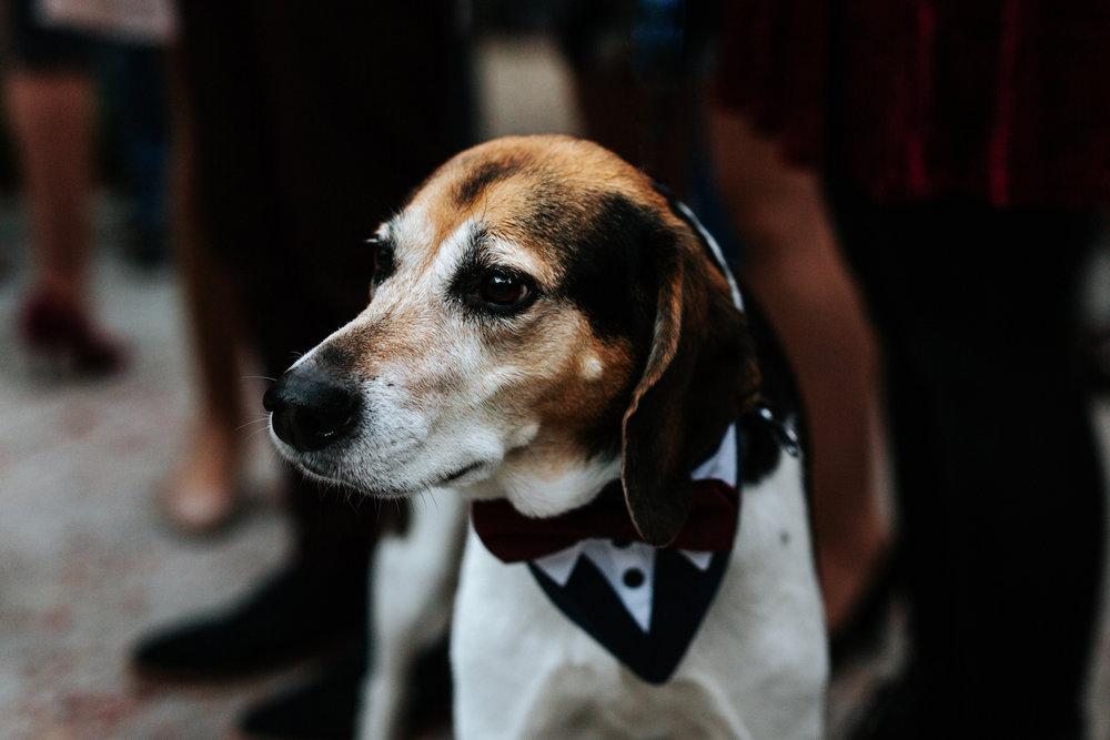Spartanburg-Greenville-Columbia-Wedding-Engagement-Photographer-305.JPG