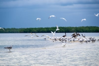 Wildlife at Everglades National Park | Credit: Stefanie Payne