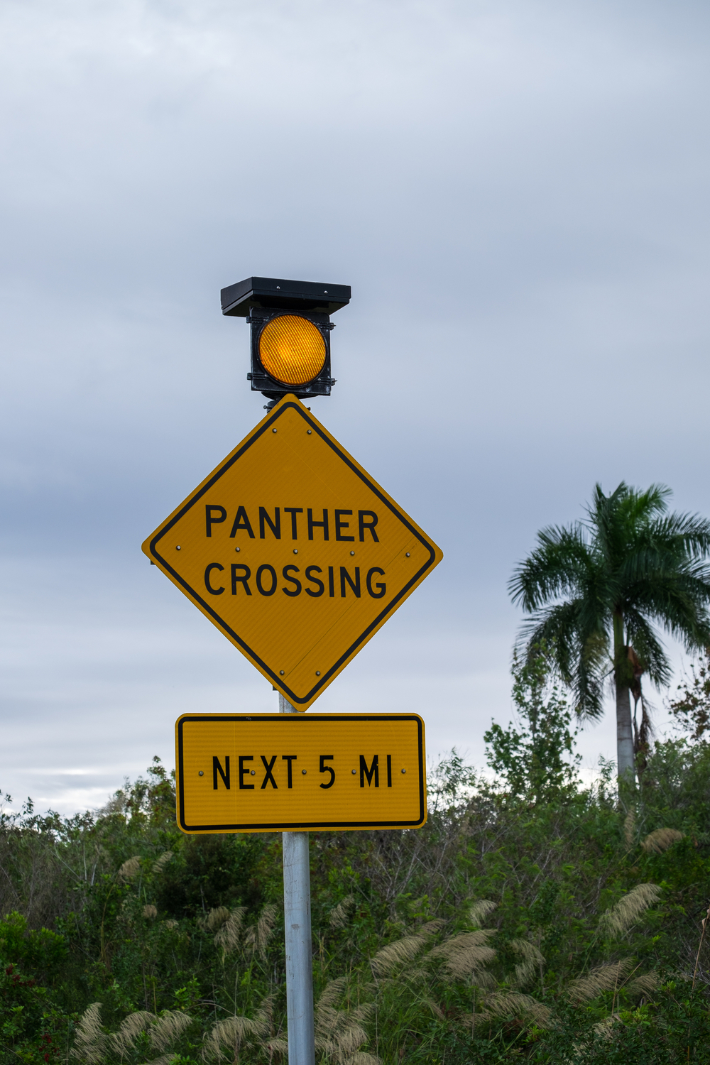Panther Crossing in Everglades National Park in Florida.