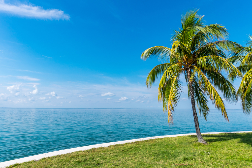 Palm trees and beautiful water....a sure sign you are in South Florida.