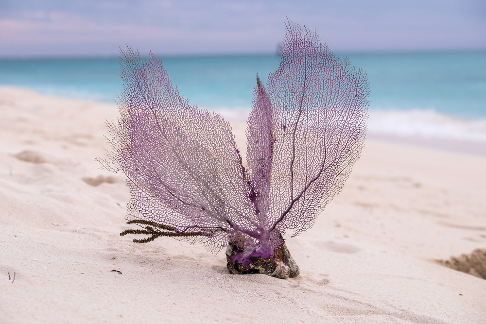 A beautiful sea fan made of soft coral