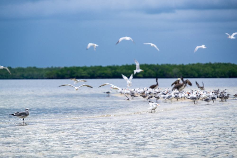 Outstanding birdlife in Everglades National Park