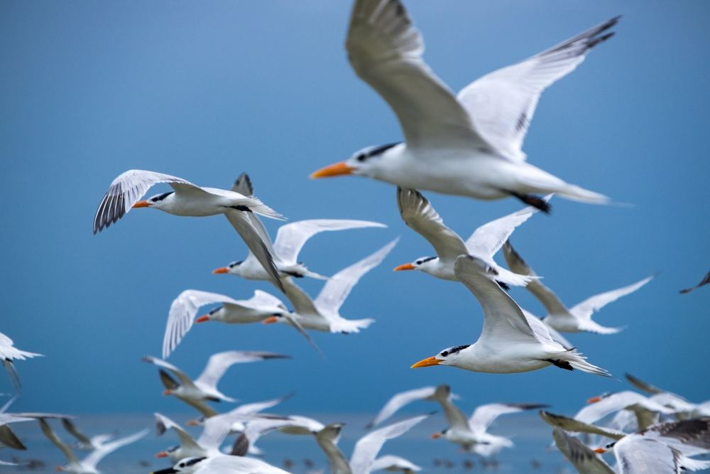 Outstanding birdlife in the Dry Tortugas