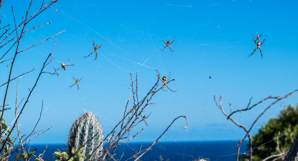 These banana spiders were waiting for us at the top of the mountain.