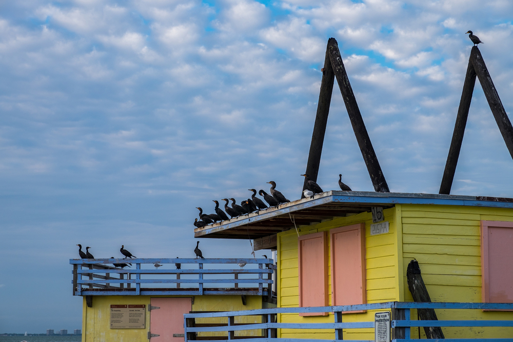 Outstanding birdlife in Biscayne National Park, pictured here, Stiltsville.