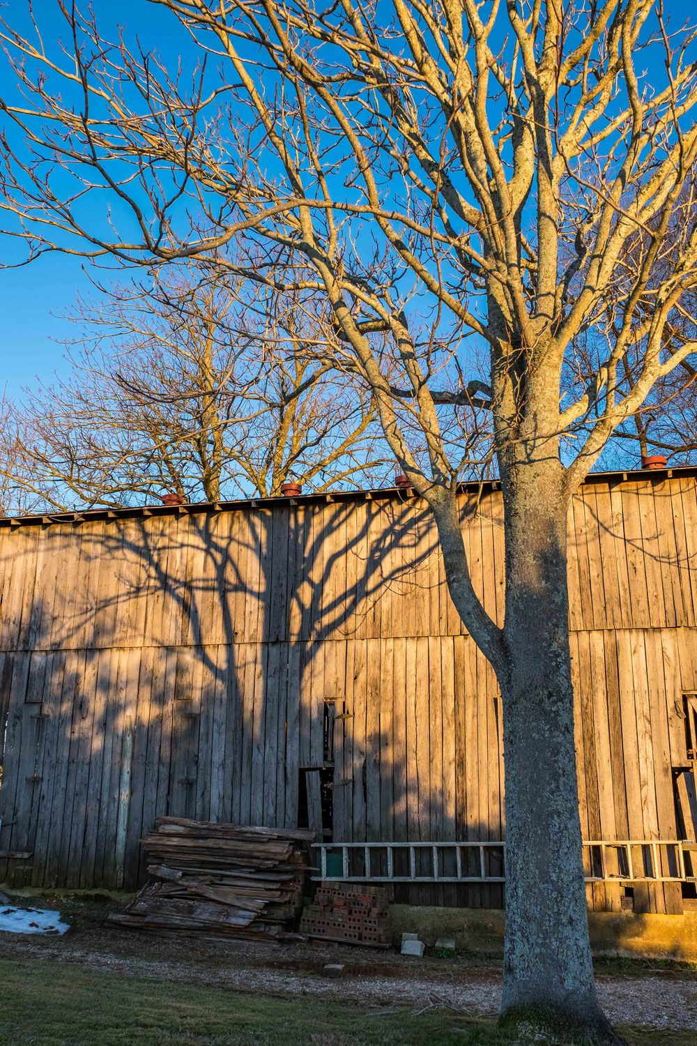 A nice sunset on a barn located in the campground. I loved how the shadow of one tree looked like the trunk of another.