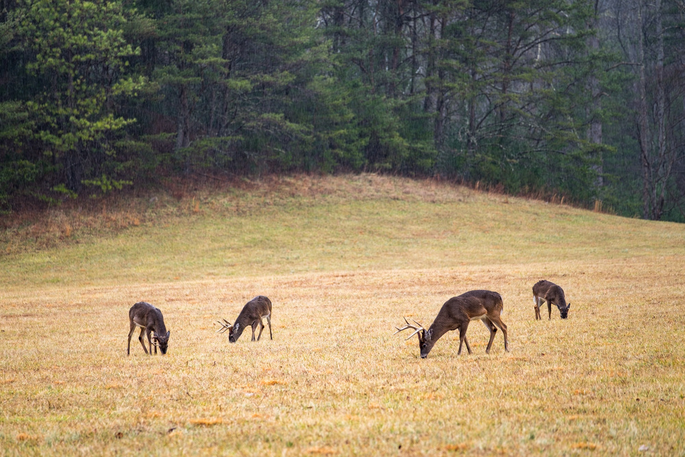 We headed straight to Cade's Cove in hopes of seeing bear, but they were likely still hibernating when we visited.