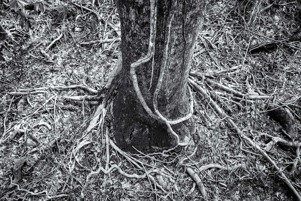 Roots and stuff, in black and white.