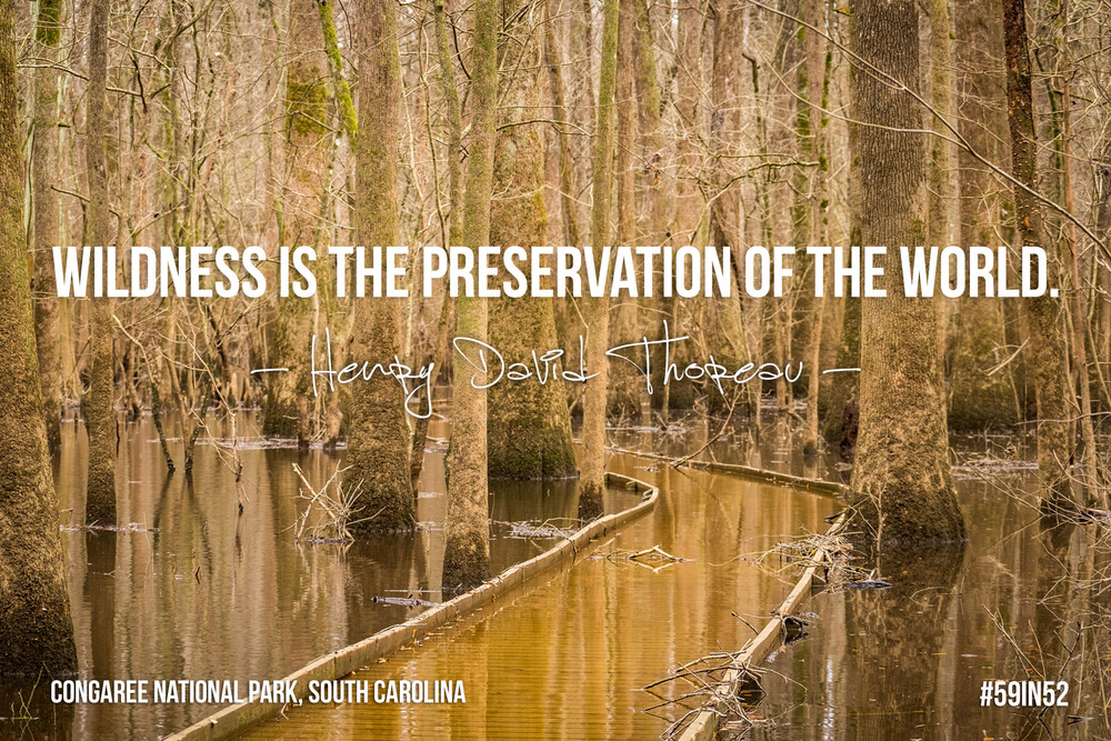 """Wildness is the preservation of the world."" — Henry David Thoreau"