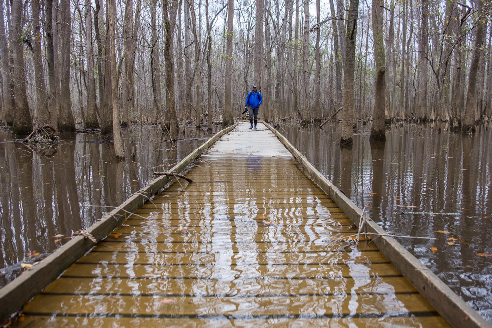 Jonathan enters a flooded Congaree National Park.