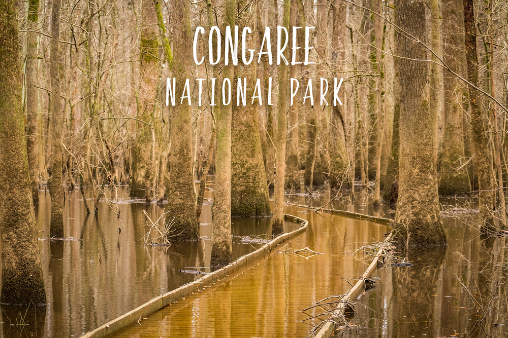 Congaree National Park | Park 8/59