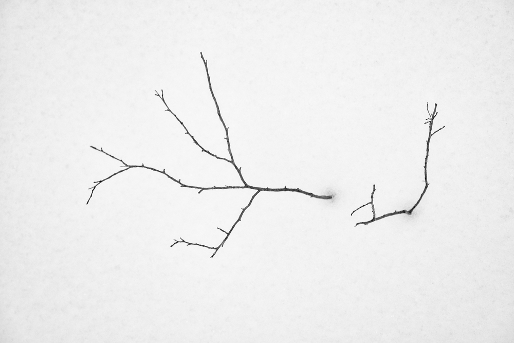 The absence of color....a small tree fights to survive.
