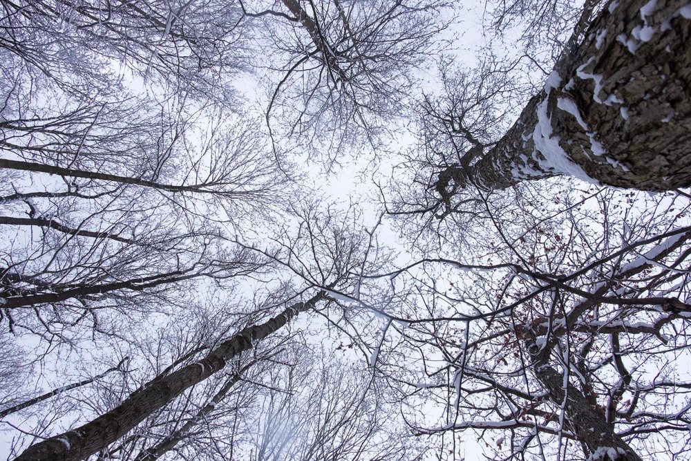 Most people don't look up very much when hiking, and they miss a wonderful tree canopy.