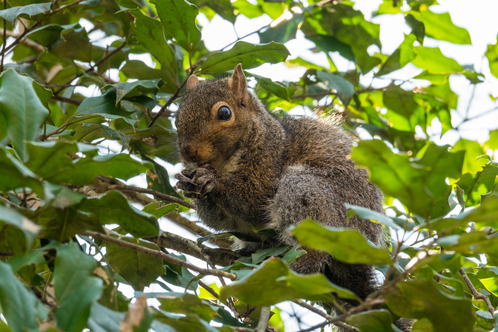 Squirrel at Congaree National Park