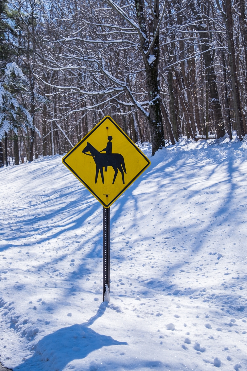 Horse crossing in Cuyahoga Valley National Park.