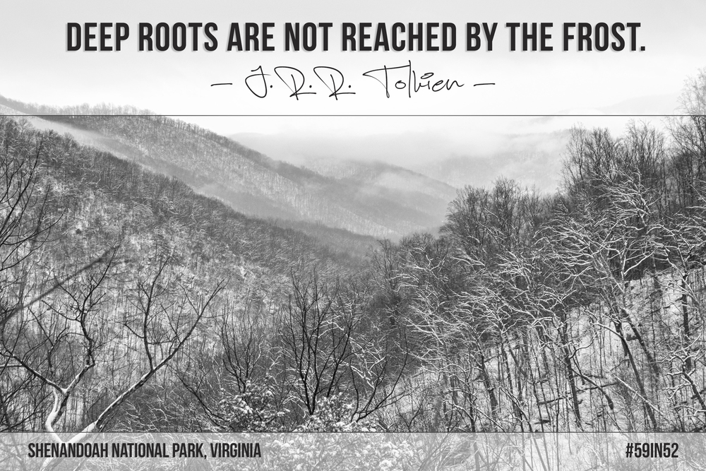 """Deep roots are not reached by the frost."" - J.R.R. Tolkien"