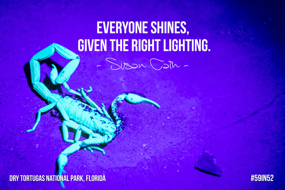 '  Everyone shines  ,   given the right lighting  .' — Susan Cain