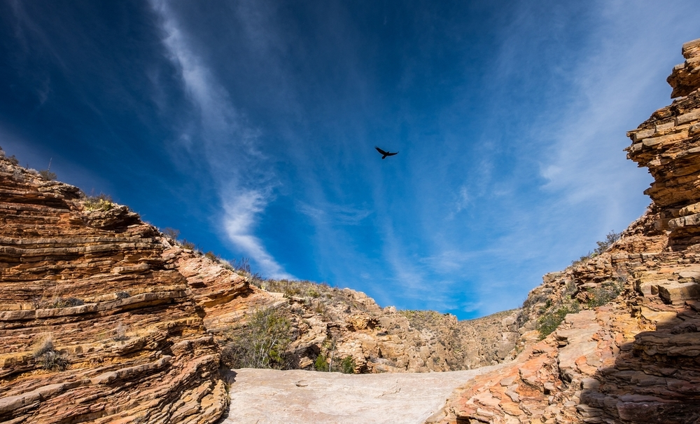 Raven in Big Bend National Park
