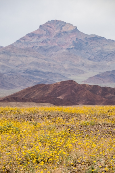 "The 2016 Death Valley ""superbloom,"" captured in early March."