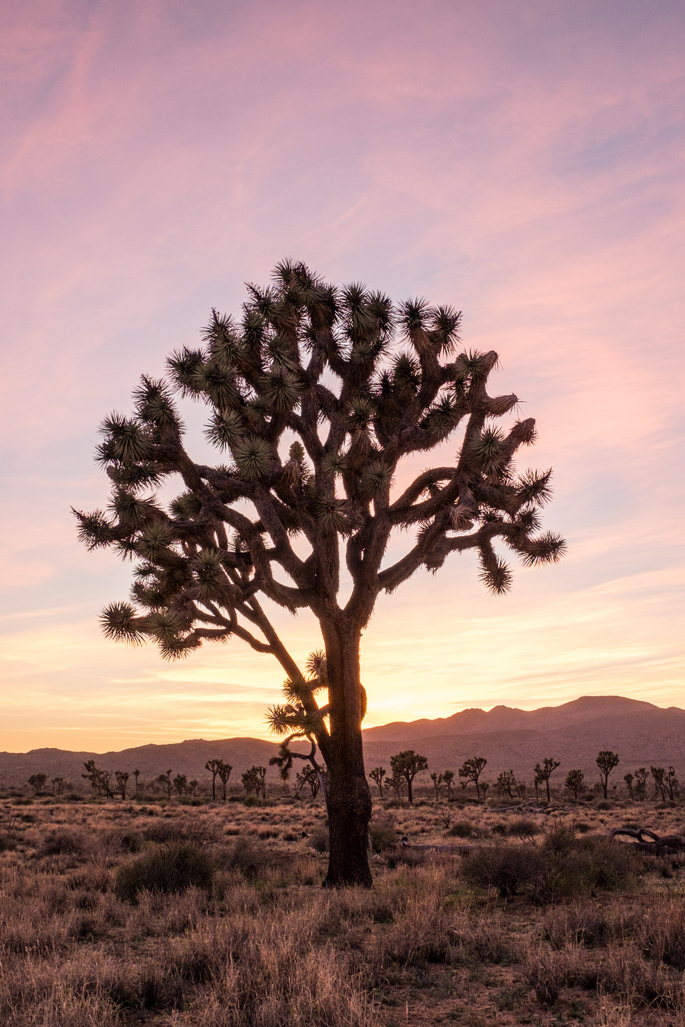 Joshua Tree National Park - 006.jpg