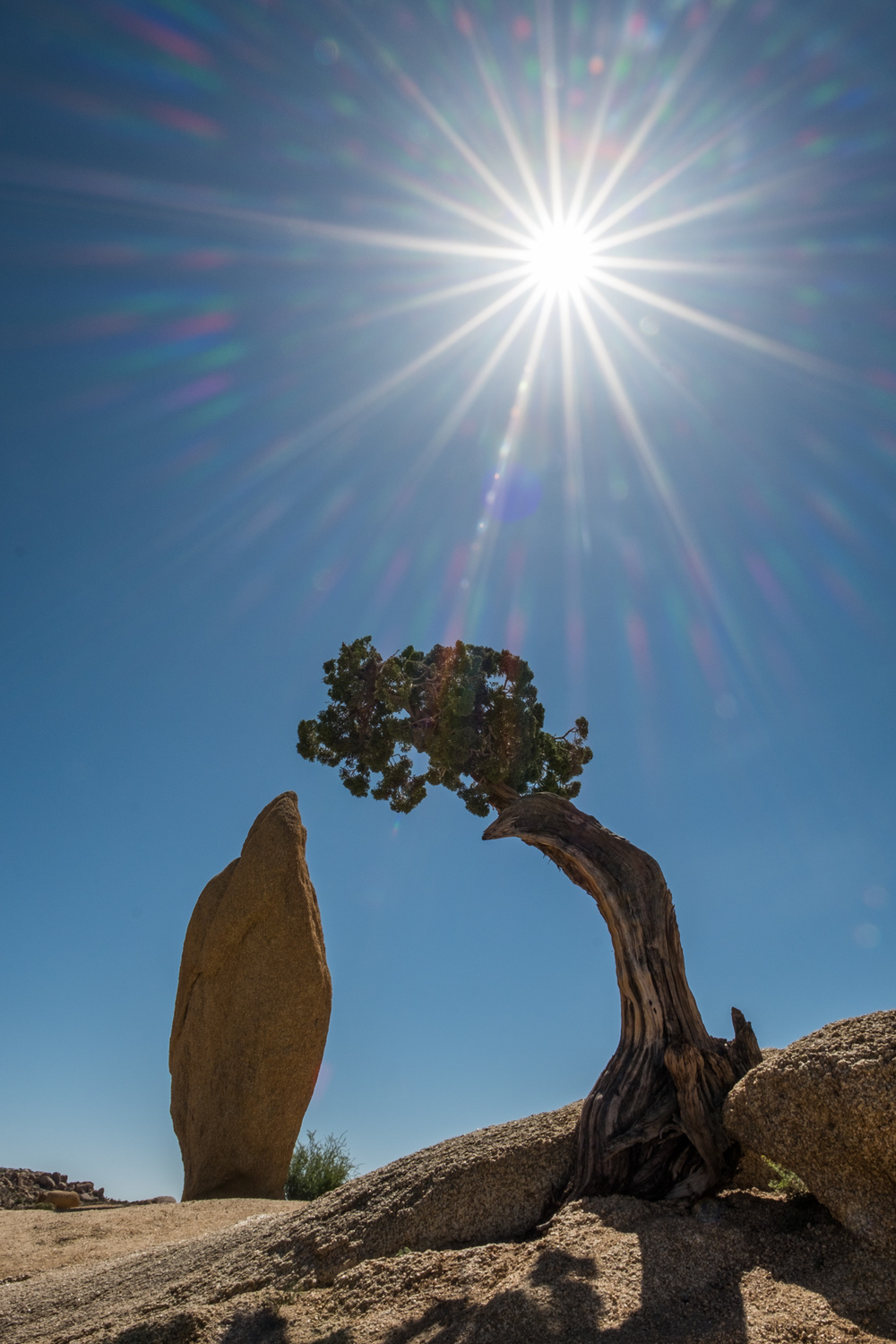 This bonsai tree and rock formation was just above our campground.