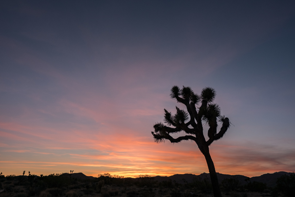 Joshua Tree National Park - 045.jpg
