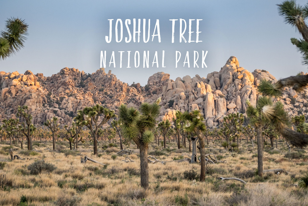 Joshua Tree National Park | Park 15/59