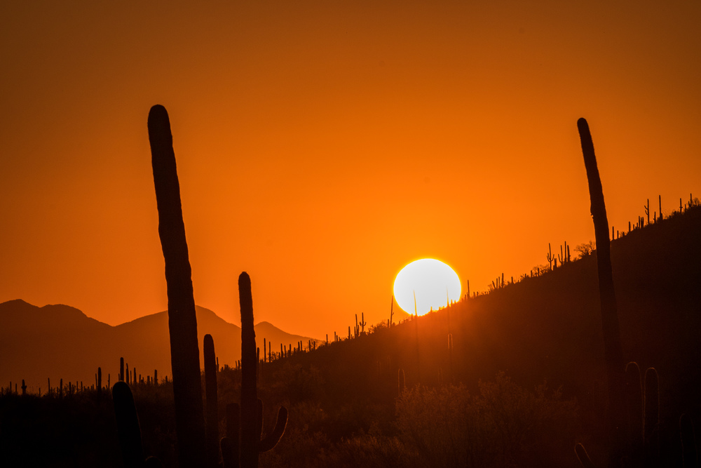 When you think of the American southwest, you are most likely envisioning Saguaro National Park.