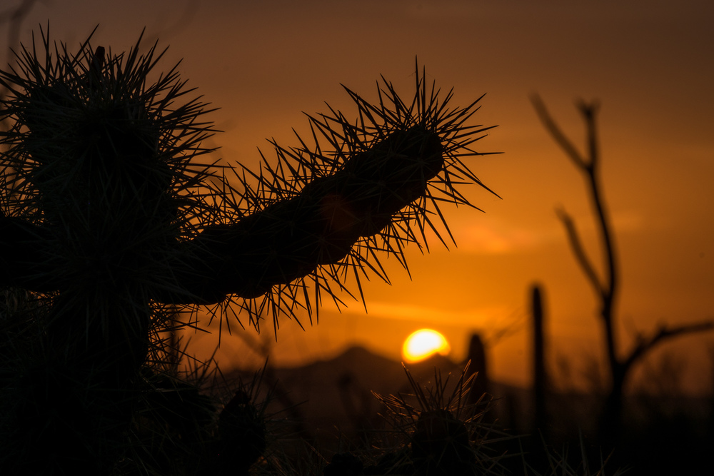 Sharp detail of a saguaro during sunset.