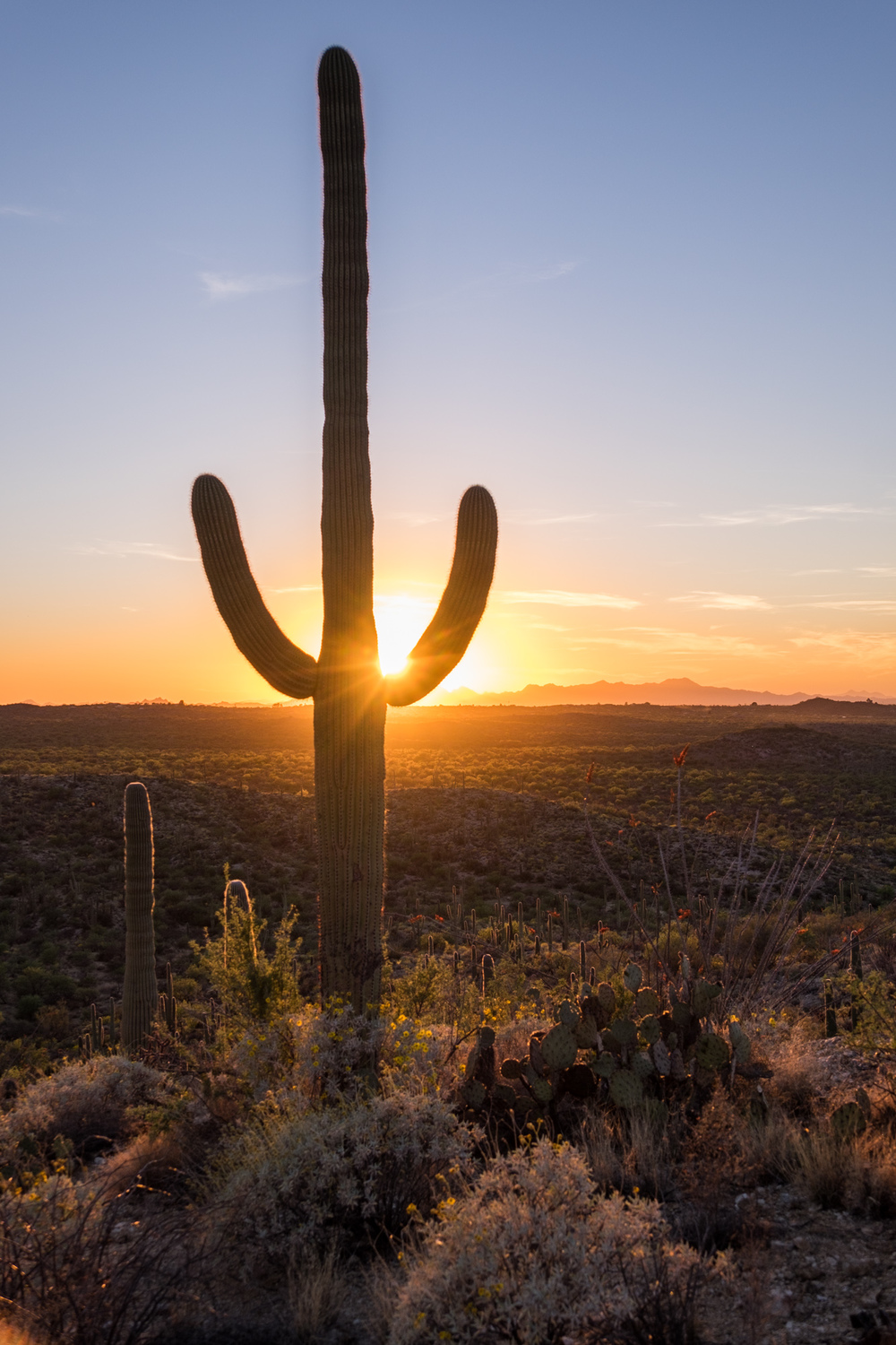 Saguaro National Park - 042.jpg