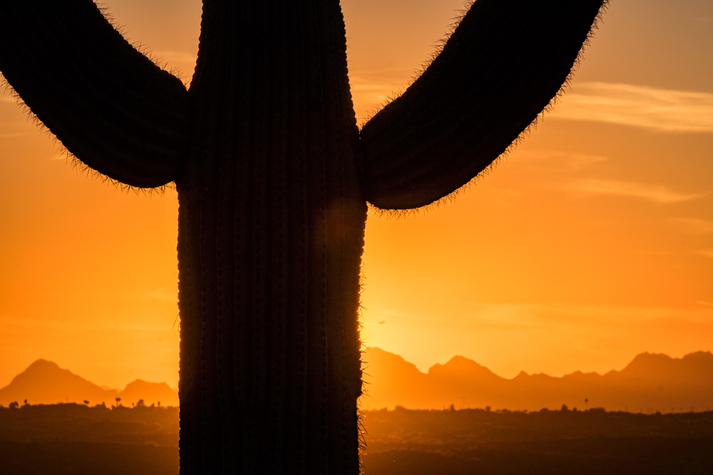 The saguaro make for fun subjects in sunset photos.