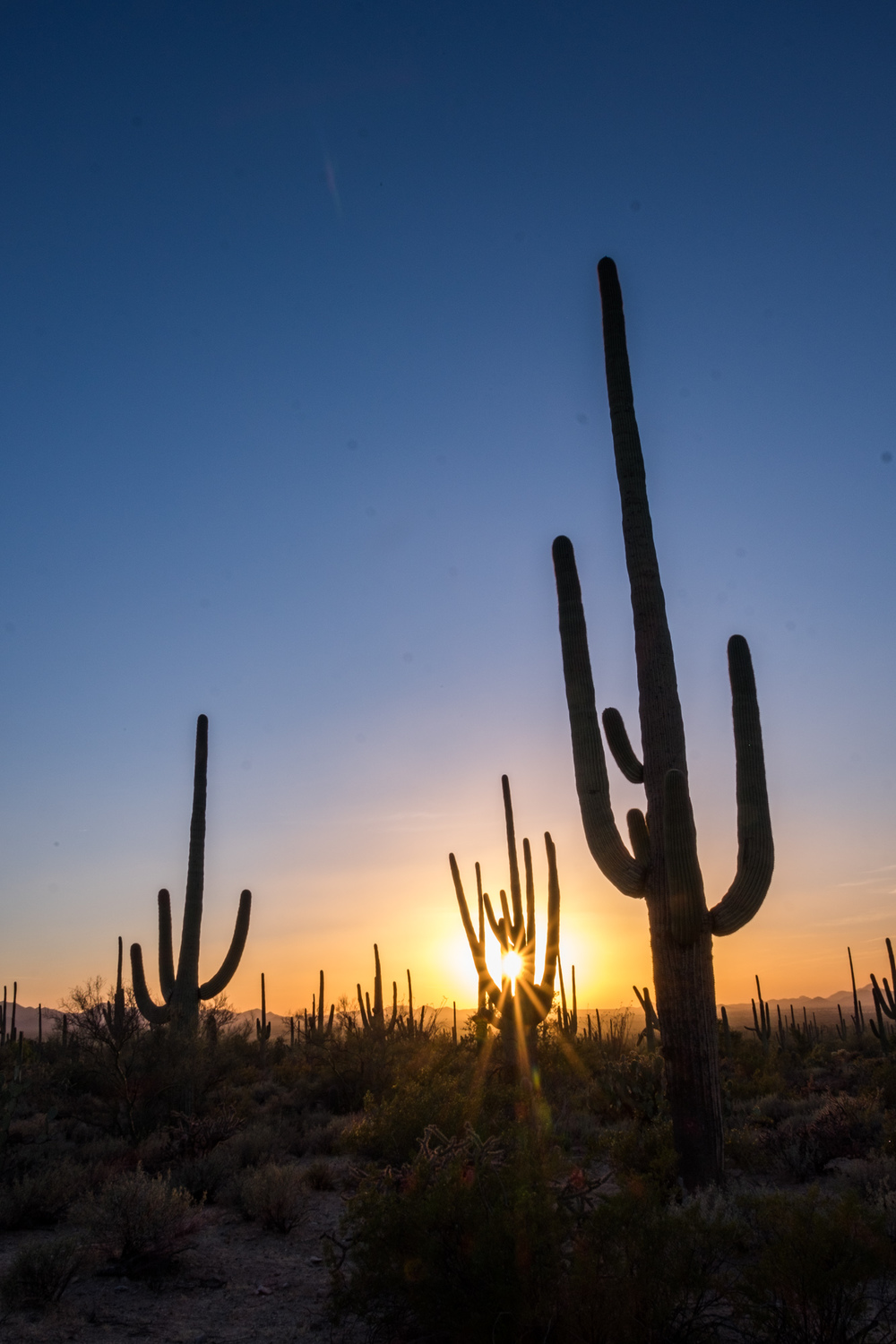 Our first sunset with the giant saguaro.