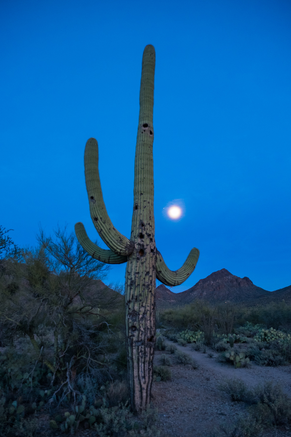 A nighttime walk among the cactus and the moon glow.