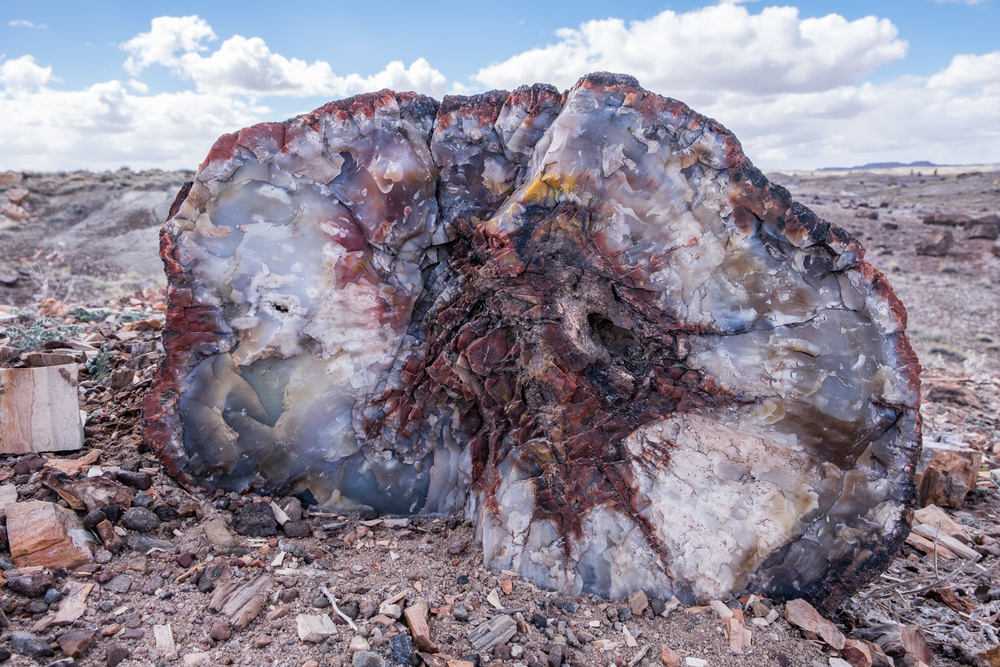 A 'typical' piece of stunning petrified wood lays in its hundreds-of-millions-of-years-old resting place.