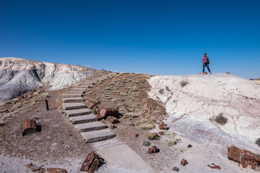 Petrified Forest National Park The Greatest American Road Trip