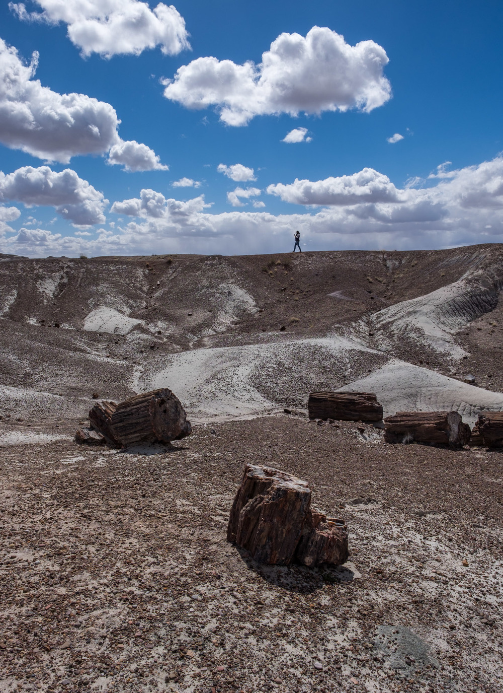 Petrified Forest National Park - 050.jpg
