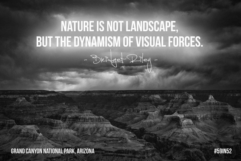 """Nature is not landscape, but the dynamism of visual forces."" - Bridget Riley"